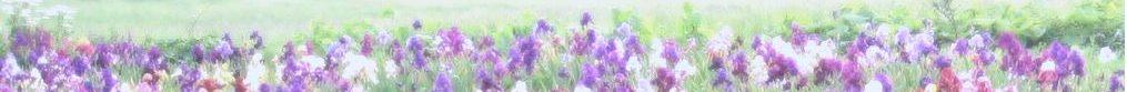 cropped-265-1.jpg